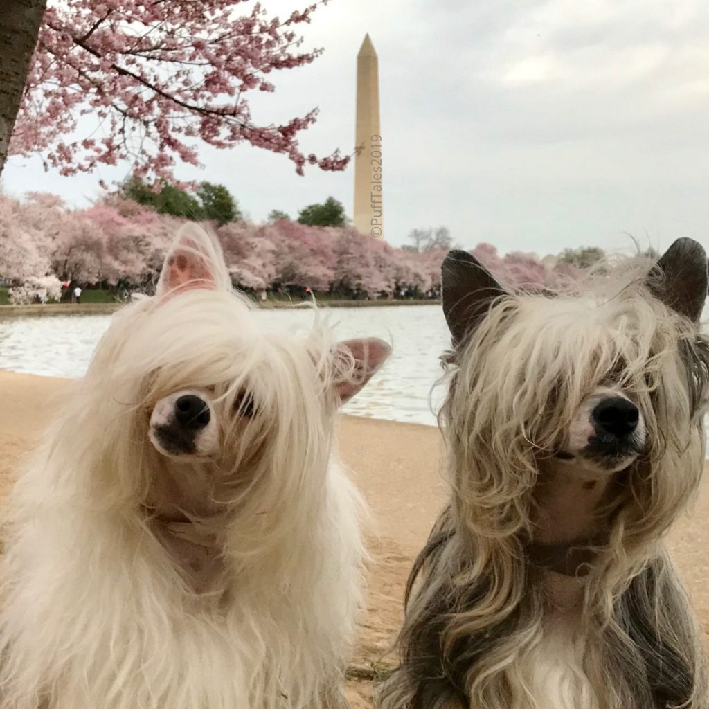The PuffTales and the Washington Monument