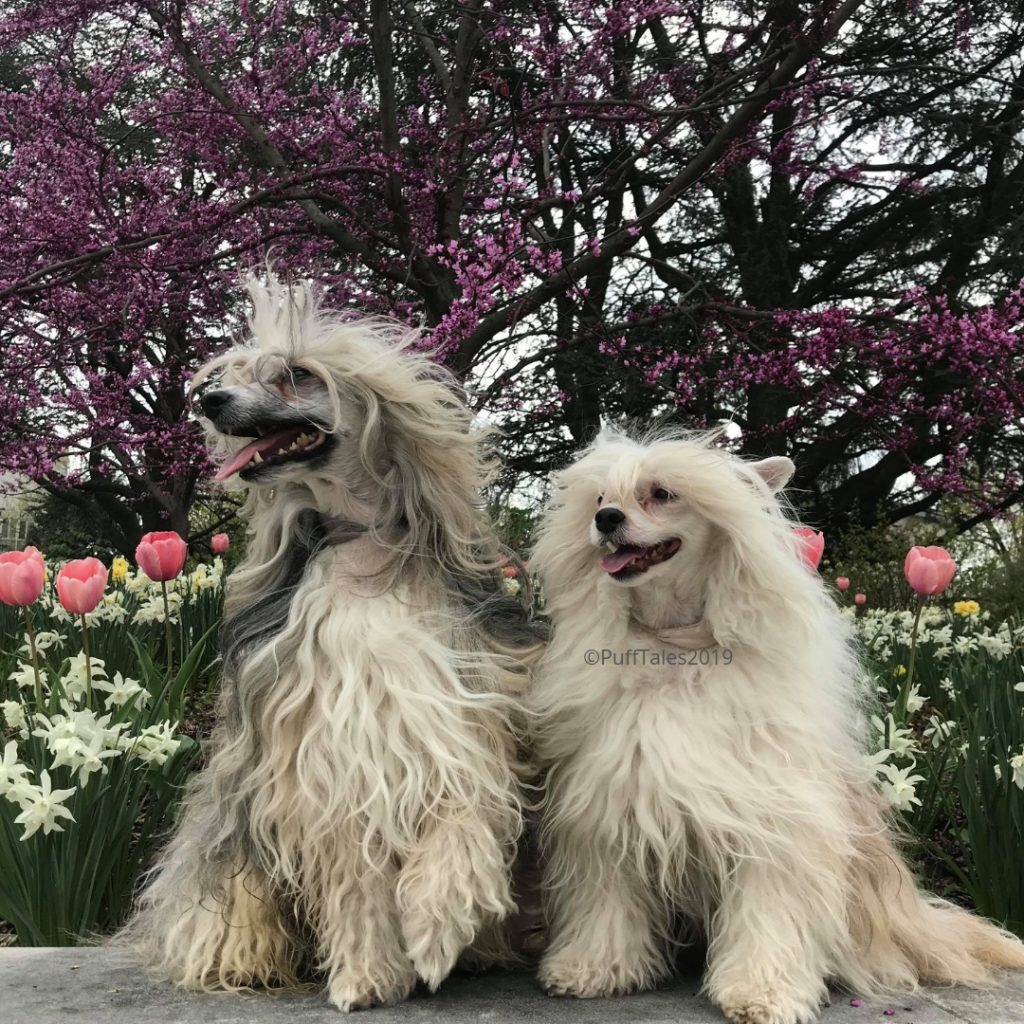 The Puffs with spring flowers